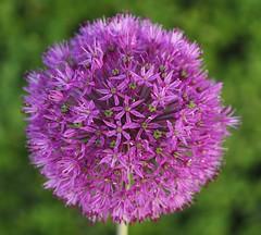 flower planet...