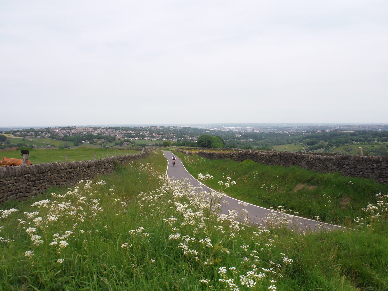 View from Viewpoint on Greenhouse Lane SWC Walk 267 - Sheffield Circular (via Porter, Limb, Sheaf and Gleadless Valleys)