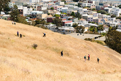 Nerds for Nature: the McLaren Park BioBlitz!  (11 May 13)