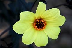 S. C. Botanic garden. California.