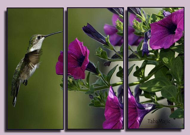 flowers devine wallpaper - photo #14