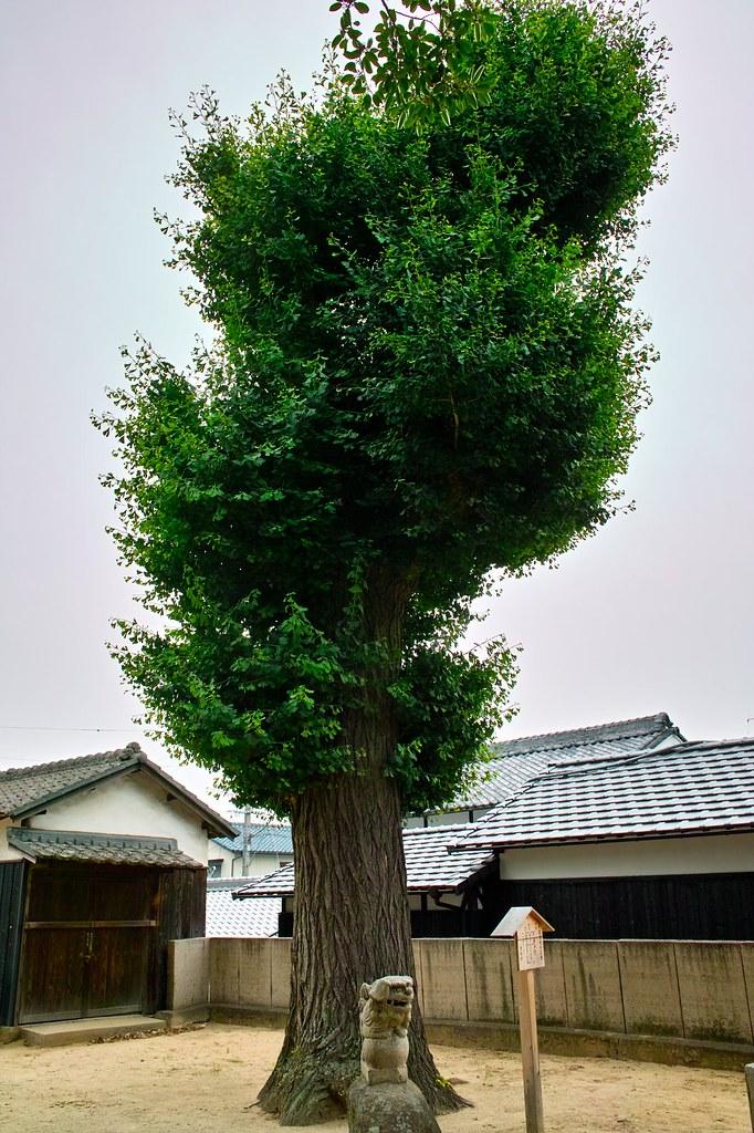 穴場神社 #7