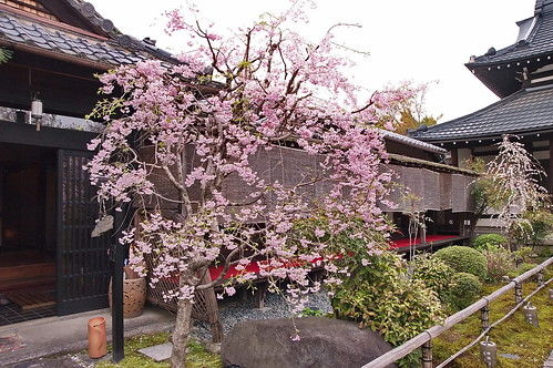 【写真】桜 : 閑臥庵