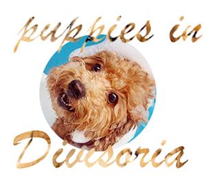 dogs puppies in divisoria, puppies for sale in divi manila
