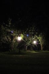 flower(0.0), sunlight(0.0), evening(0.0), moonlight(0.0), street light(0.0), sparkler(0.0), reflection(0.0), landscape lighting(1.0), light(1.0), darkness(1.0), night(1.0), lighting(1.0),