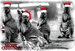Aussie Christmas card