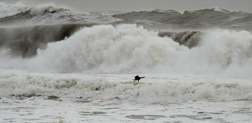 ireland sea wild storm weather dingle wave cormorant