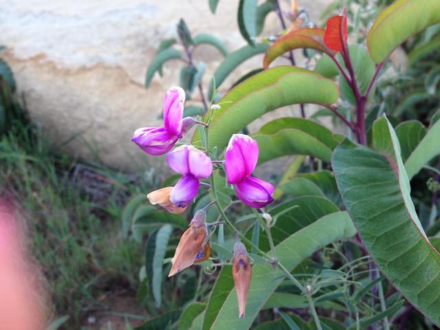 Jamul Wild Flowers