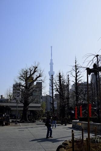 枯れ木とスカイツリー by leicadaisuki