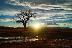 Lone Cottonwood Sunset Silhouette_4916