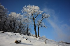 Trees covered with rime on West Tianmu Mountain