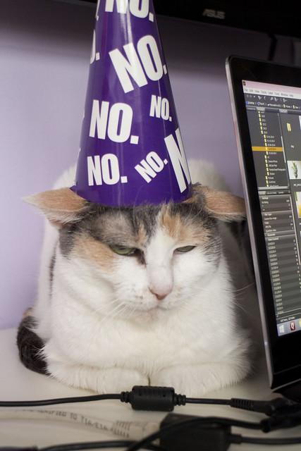 Grumpy Cat Birthday_11