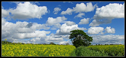 clouds walking countryside sunny doncaster oilseedrape southyorks barnburgh