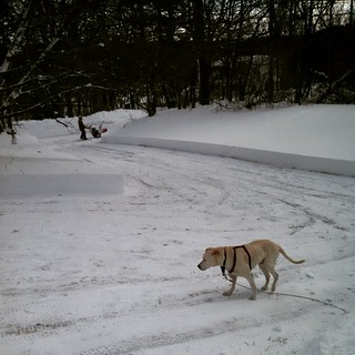 "Got snow? Zeus was ""helping"" his Daddy clear the driveway this morning. I think we were somewhere around 30 inches. #Blizzard #snow #newhampshire #newengland #dogstagram"