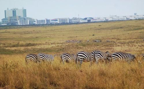 kenya wildlife nairobi nairobinationalpark