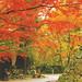 懐古園・石垣と紅葉