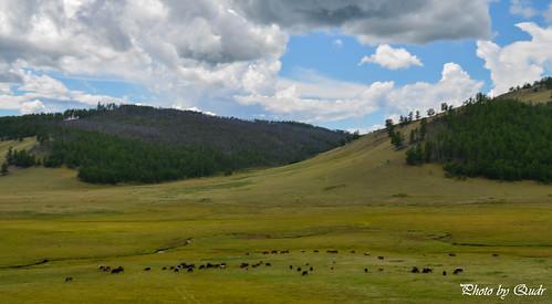 countryside mongolia nomadic