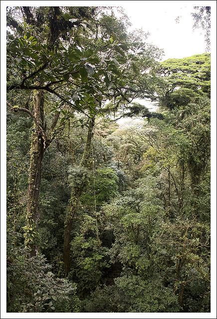 Tenorio Rain Forest 2015-02-10 8