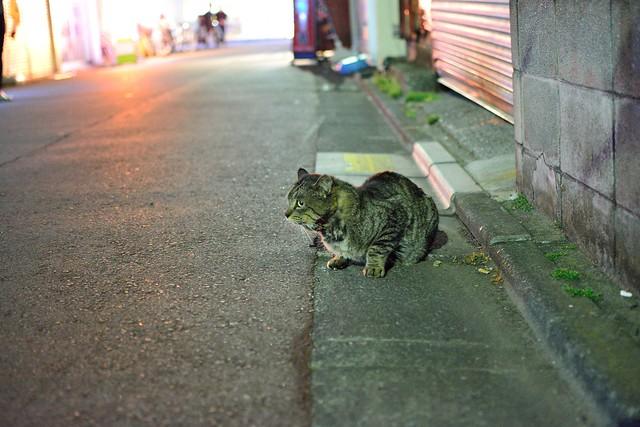 夜のネコ2