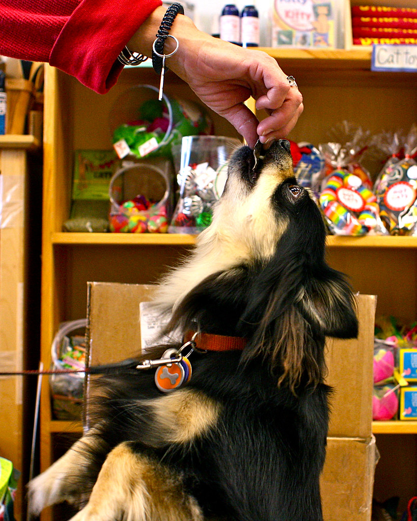 Luna reaches for a treat while her owner shops at Citi Pets on Monday, May 6, 2013. Photo by Gabriella Gamboa / Xpress