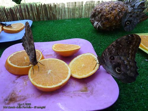 Nel Mondo delle Farfalle - Si mangia!