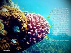 Pink Finger Coral