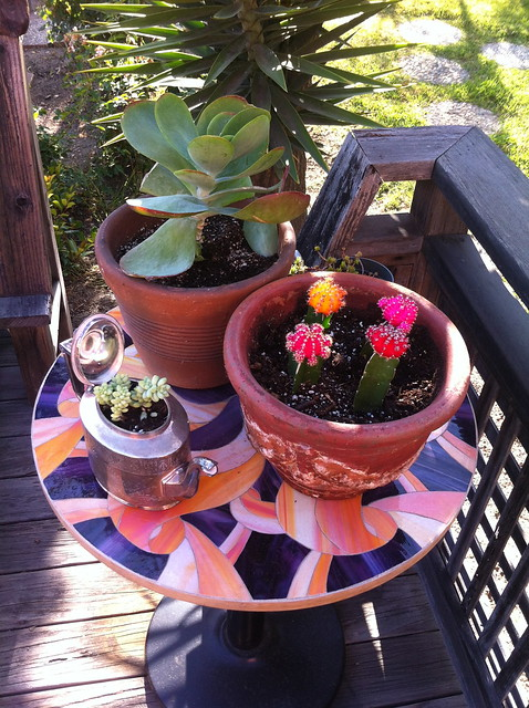 drollgirl's potted plants - teapot succulent container
