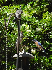 Bluebird and progeny