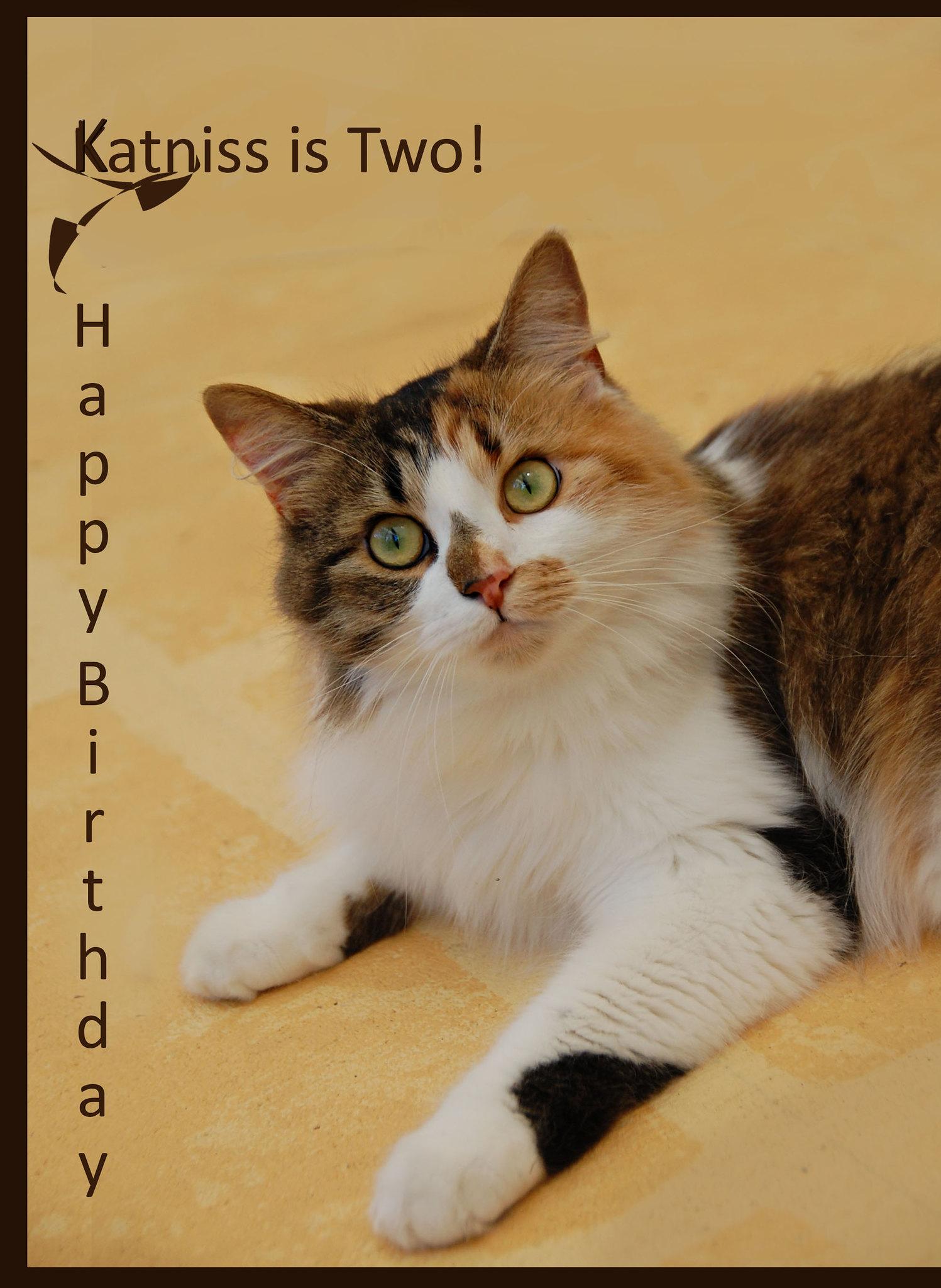 Best Cat Hairball Treatment Uk