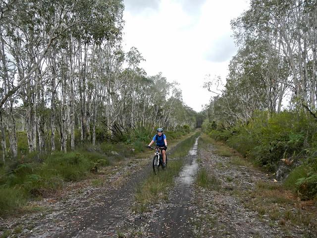 Riding Through the Melaleucas