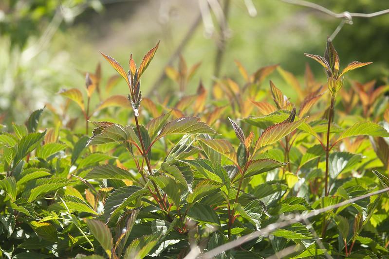 Flushed Foliage
