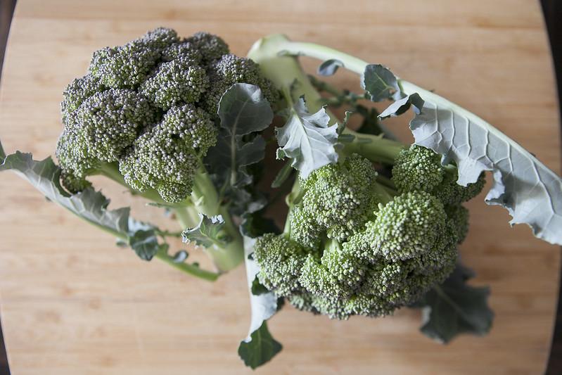 broccoli harvestIMG_2568