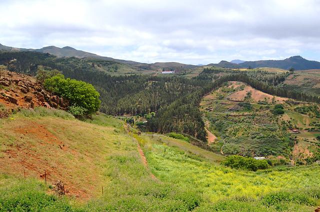 Fagajeste, Gran Canaria