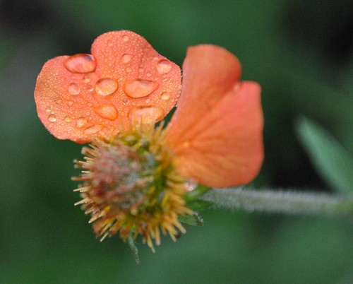 Flowers, Buildings, and Critters 127_crop