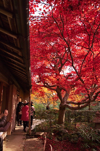 【写真】2012 紅葉 : 厭離庵/2020-10-15/IMGP7833