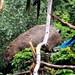 Small photo of Pushy Parrot
