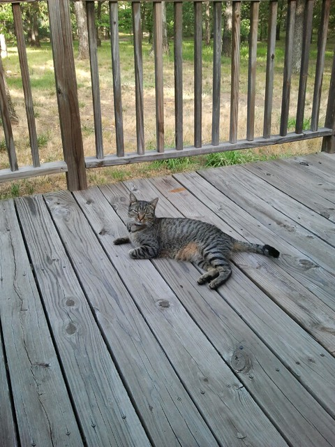 My cat on the front porch