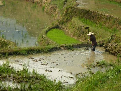 Yunnan13-Yuanyang 21 (10)