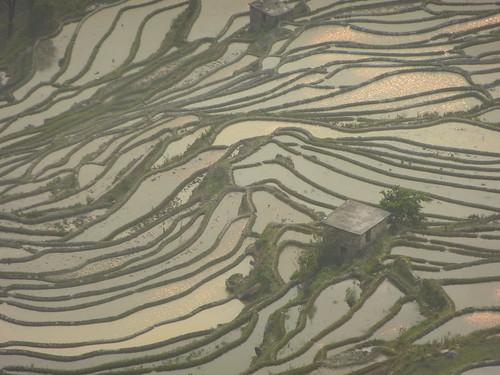 Yunnan13-Yuanyang 24-Bada (39)