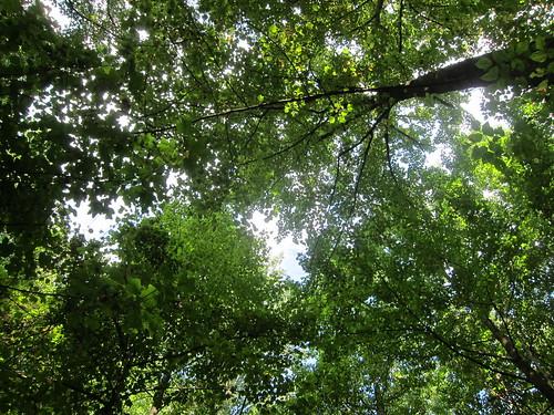 Glyndon woods