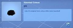 Haunted Coleus