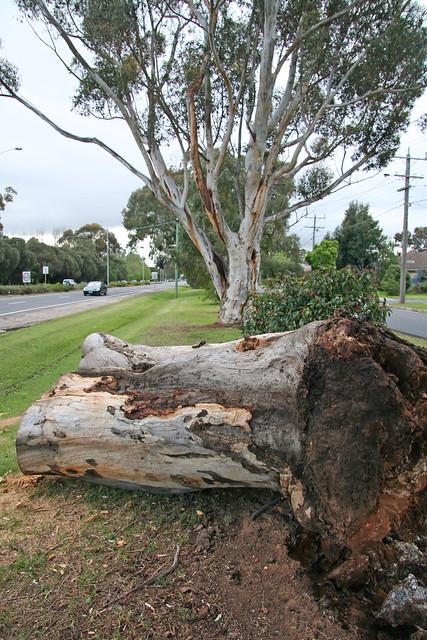 20131006_2022 fallen Avenue of Honour Tree