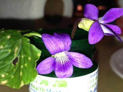 November violets