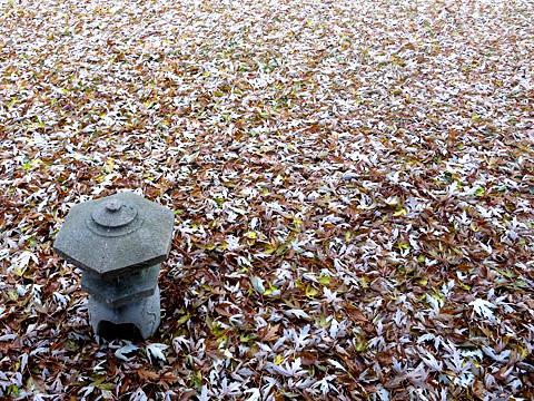 leaves-1113