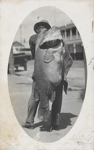 Murray River Cod Postcard by Australian National Maritime Museum on The Commons