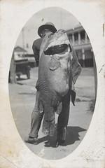 Murray River Cod Postcard