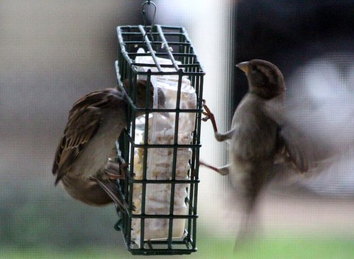 birdssuet2-7