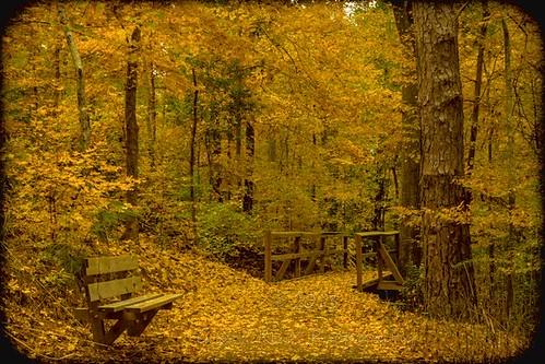 texas unitedstates getrdone woodenbridge nacogdoches hikingtrail trailbench sonyslta77v gaylamizegardentrail