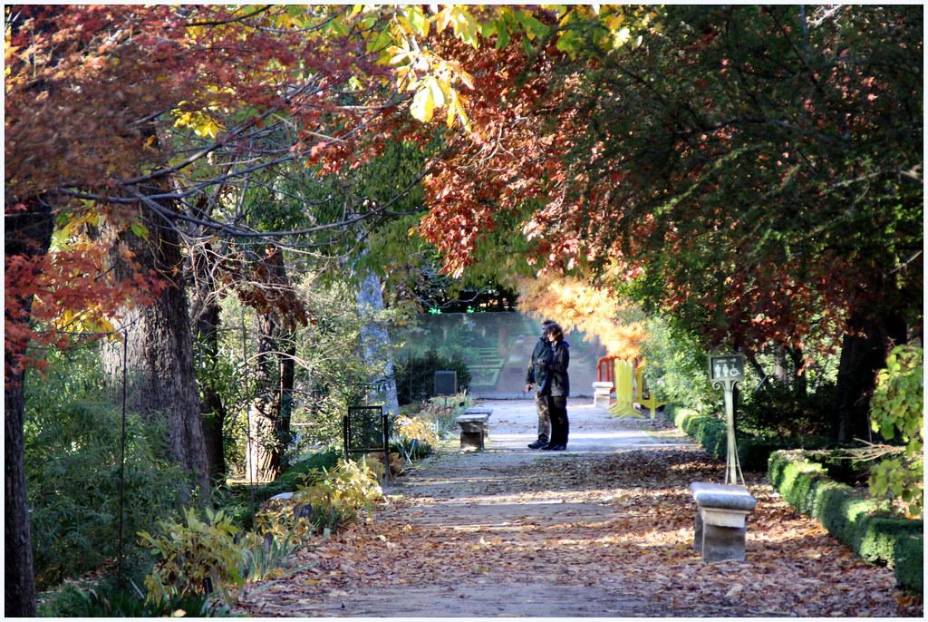 del Jardín Botanico de Madrid en noviembre de 2013-209