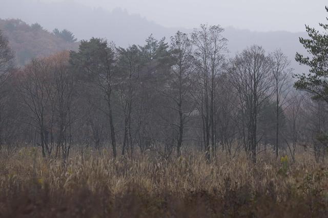 霧ヶ谷湿原は,すっかり冬の装い.